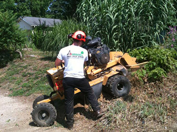 Brush Branch Tree Triming Removal Zanesville