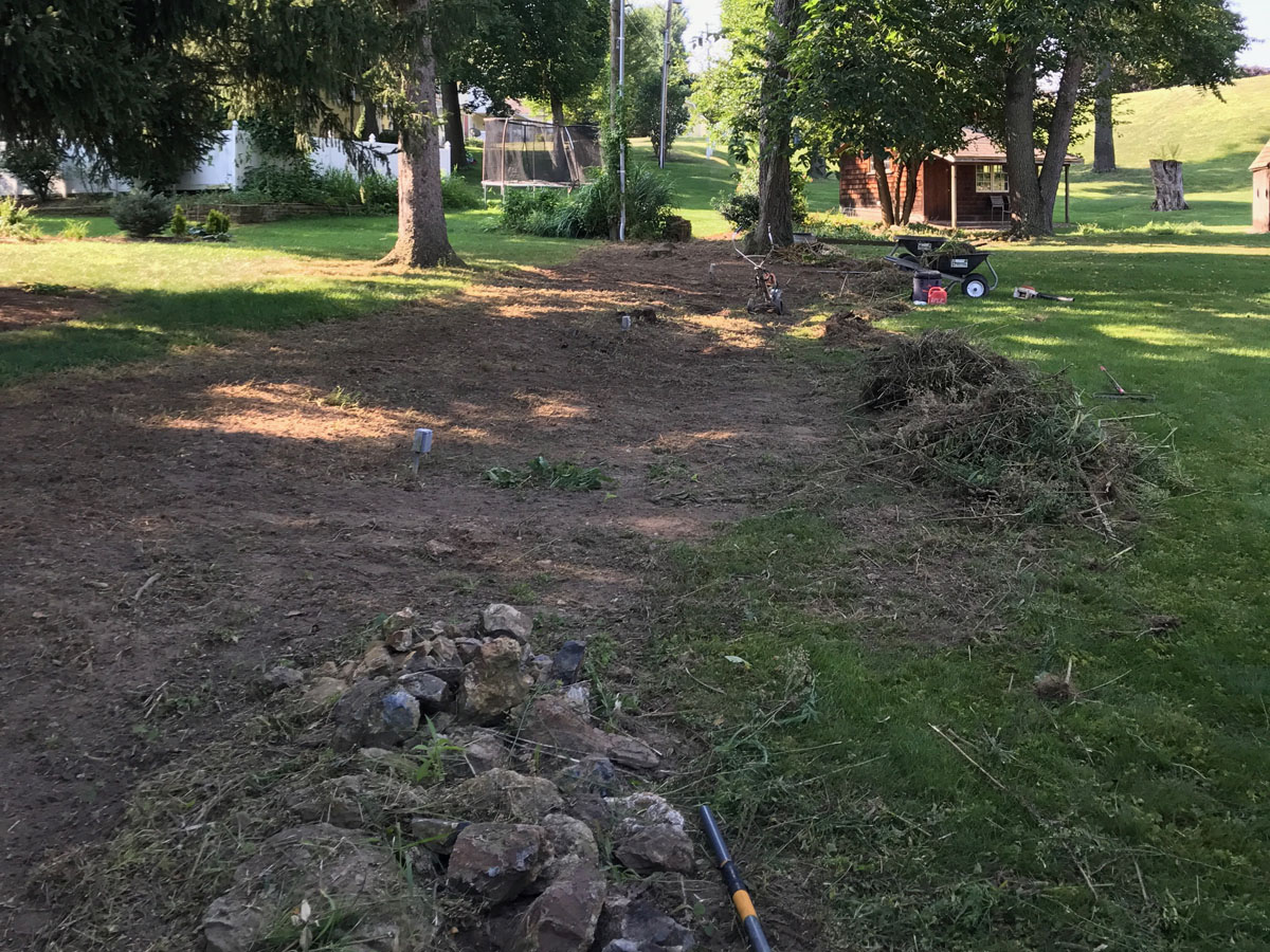 Tree Brush Removal Seeding 1